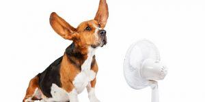 Typy klimatizací: jaký je pro vás ten nejlepší?